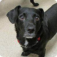 Adopt A Pet :: Smitty - Gilbert, AZ