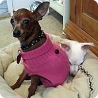Adopt A Pet :: Sophie - Plainview, NY