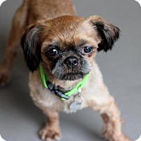 Adopt A Pet :: Beaker - Atlanta, GA