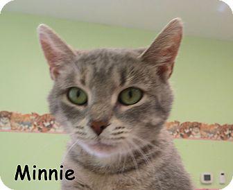 Domestic Shorthair Cat for adoption in Warren, Pennsylvania - Minnie