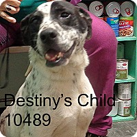 Adopt A Pet :: Destiny's Child - Greencastle, NC