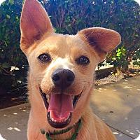 Adopt A Pet :: Jax - Mission Viejo, CA