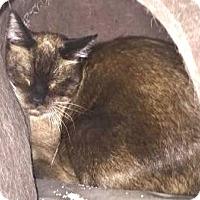Adopt A Pet :: Rosaline - Davis, CA