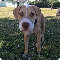 Adopt A Pet :: Squidward - Ft. Myers, FL