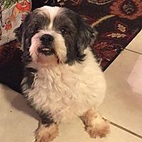 Adopt A Pet :: Grady - Matawan, NJ