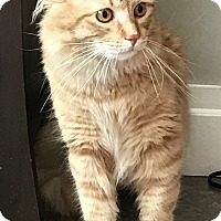 Adopt A Pet :: Terrence - East Hanover, NJ