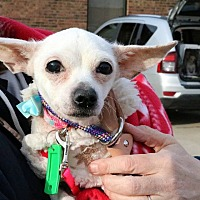 Adopt A Pet :: Kylie - Sugar Grove, IL