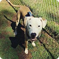 Adopt A Pet :: Cooper - Woodstock, GA