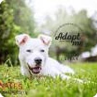 Adopt A Pet :: Caesar - Bradenton, FL