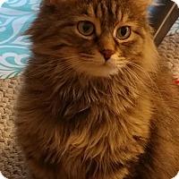 Adopt A Pet :: Sasa - Milwaukee, WI