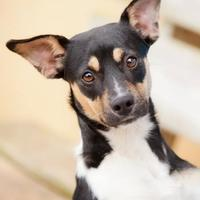 Adopt A Pet :: Roxie - Cartersville, GA