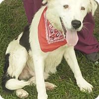 Adopt A Pet :: Ranger - Manning, SC