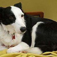 Adopt A Pet :: Olivia - Evansville, IN