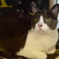 Adopt A Pet :: Bunny - Buena Vista, CO