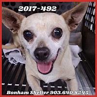 Adopt A Pet :: Sassy - Chippewa Falls, WI