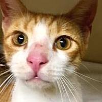 Adopt A Pet :: James $20 - Lincolnton, NC