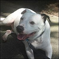 Adopt A Pet :: Spencer - Oakland Gardens, NY