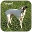 Photo 2 - Rat Terrier Mix Dog for adoption in Harlan, Iowa - Target