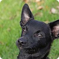 Adopt A Pet :: Ray - Houston, TX