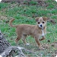 Adopt A Pet :: Mindy - Arlington, TX