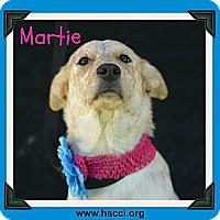 Adopt A Pet :: Martie - Plano, TX