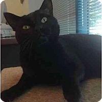 Adopt A Pet :: Suzi Q - San Ramon, CA