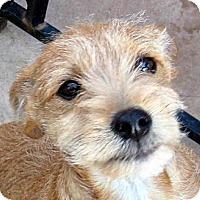 Adopt A Pet :: Baby Kix - Oakley, CA