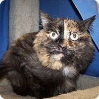 Adopt A Pet :: K-Walker2-Willma - Colorado Springs, CO