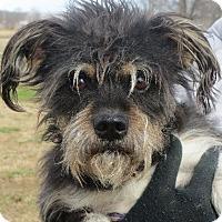 Adopt A Pet :: Austin - Greenville, RI