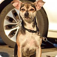Adopt A Pet :: Pepper - Meridian, ID