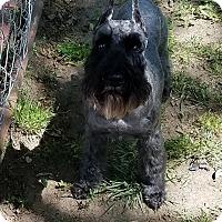 Adopt A Pet :: Skye-HOME PENDING - Southeastern, KS