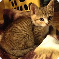 Adopt A Pet :: Pumyra - Trenton, NJ
