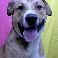 Adopt A Pet :: Elmer Meyer - Seattle, WA