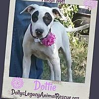 Adopt A Pet :: DOTTIE - Lincoln, NE