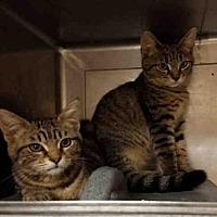 Adopt A Pet :: A1717052 - Los Angeles, CA