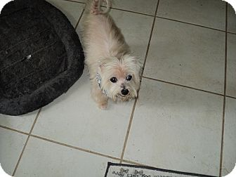 Terrier (Unknown Type, Small) Mix Dog for adoption in Tavares, Florida - Teddy