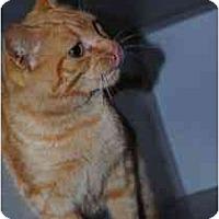 Adopt A Pet :: DaVinci - Marietta, GA