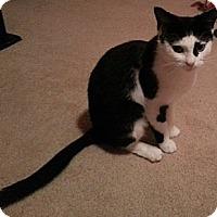 Adopt A Pet :: Missy Sue - Richmond, VA