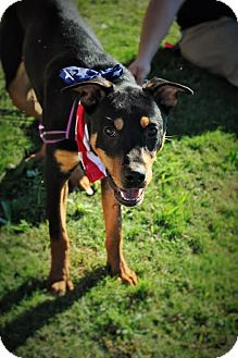 German Shepherd Dog Mix Puppy for adoption in Evans, Georgia - Braxton