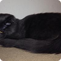 Adopt A Pet :: Leonardo - Santa Rosa, CA