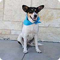 Adopt A Pet :: Sylvia - Weatherford, TX