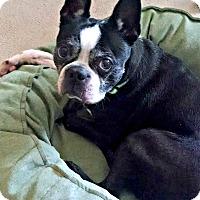 Adopt A Pet :: Walle - Greensboro, NC