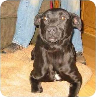 Labrador Retriever Mix Dog for adoption in New Carlisle, Indiana - Ellie Mae
