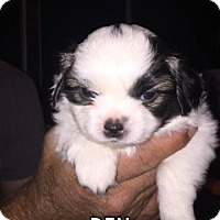 Adopt A Pet :: BEN - Hurricane, UT