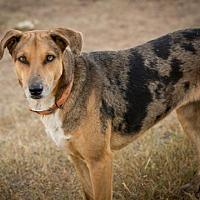 Adopt A Pet :: IsabelW - Olympia, WA