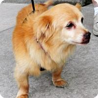 Adopt A Pet :: Ollie - Umatilla, FL
