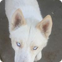 Adopt A Pet :: Summer - Apple valley, CA