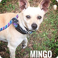 Adopt A Pet :: Mingo - West Hartford, CT
