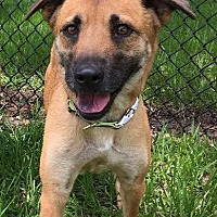 Adopt A Pet :: Ginger - A Bonded Pair *F* - Sanford, FL