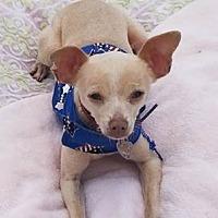 Adopt A Pet :: Chilito - San Diego, CA